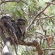 オーストラリア ケアンズの鳥さんNo11