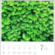 【お知らせ】コケ好きのためのカレンダー「苔暦2018」ができました。  ※今日から販売スタートします!