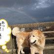 日本の会社が平昌オリンピックの設計運営管理!映像・音響機器・リンク・ジャンプ台・暴風ネットなど