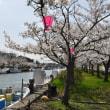 今年は桜の満開が早過ぎる・・・・・
