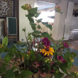 校内の生け花たち