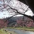 素敵な眺めの桜・・・河津桜