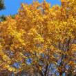 コナラの黄葉など
