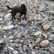 台風後の川⛈🌪⛈