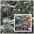 確か、朝方は雪景色だった。