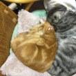 今日の猫模様 其の13