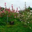 (地元)百合の花咲く散歩道