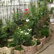 今日は当直明け 昼から庭の手入れ