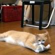 『万引き家族』見てきたよ👩&😄【猫日記こむぎ&だいず】2018 06 15