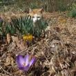 春のさっちゃん