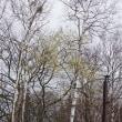 春の花木といえば? Willow