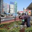 ●3/13 環境の緑化と美化報告 花の移植