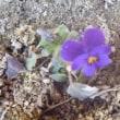 春の小さな足音