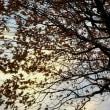 晩秋から、冬へ。