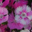 「沖縄願寿ゴーヤー」苗の移植、「イエローアイコ」苗・「ステラミニトマト」苗の植え付け