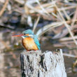 2018・・・2月の比企の里・浅羽ビオトープ・・・川と田んぼと野鳥のいる風景