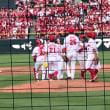 カープ観戦で日焼け⁉️九里投手の今季初勝利おめでとう‼️
