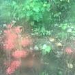 秋にも咲くのですか。キミガヨウラン⁇