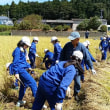 元気いっぱい稲刈り体験