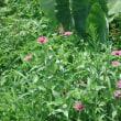 散歩の風景、アゲハ蝶