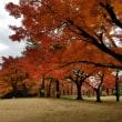 庭園散策。絶景の紅葉!竹林!
