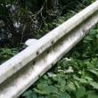 雨用心から水引っ込み