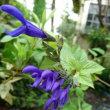 キルティングの開始と紫色の花達