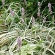 続☆秋の宿根草