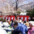 瑞応寺の観桜会