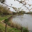 乙戸沼公園の八重桜と噴水