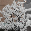 やはり大雪に・・・