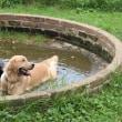 Woofへ 水を得た河童さん