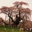 1997桜出会い旅(三春)
