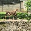 多摩動物公園に行ったよ!