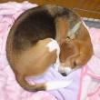 【今週のオレオ と クッキーの寝顔・寝姿】+【ドックライトをより明るく・・・】