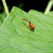 きのうのゼフィルス以外の虫たち