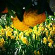 『寺社の花』 宝前院