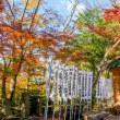 紅葉@諏訪八幡神社