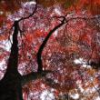 麓城址の紅葉