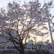 桜満開宣言&新メニュー「プレミアム・カットコース」のご紹介
