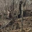 槍戸山〜一の森