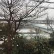 名残雪4。