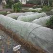 菜園は秋から冬を向いている