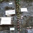 地質年代「チバニアン(千葉時代)」誕生へ