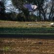 圃場管理計画