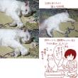 猫たちの夏