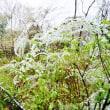 雪の赤塚植物園 前編(2018.3.21撮影)