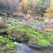 ぐんまの紅葉、チャッボミゴケ公園、中之条