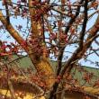 桜前線上空通過
