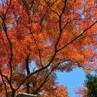 ぶるっ! 11月23日(金・勤労感謝の日)曇り時々晴れ